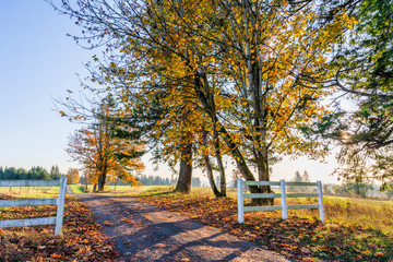 Road to autumn landscape of sunlit foliage of trees behind a wooden fence