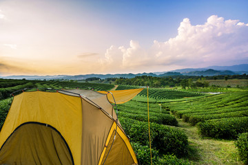 Outdoor tent with the tea plantation landscape background