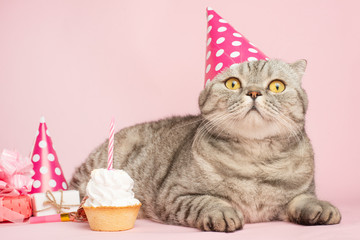 cheerful cat in a cap and a cupcake celebrates a birthday, on a pink background