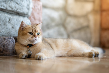 A brown cat sits happily on the floor in the room.