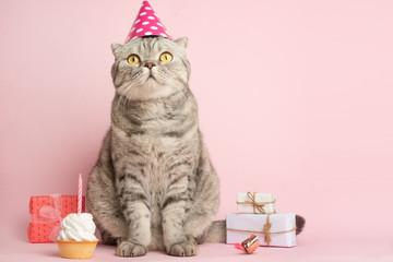 Cat celebrates birthday, on a pink background Fototapete