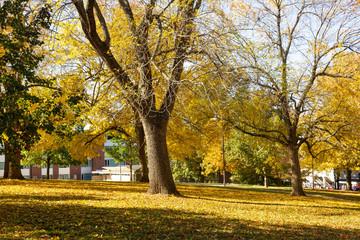 Autumn's Walk #4