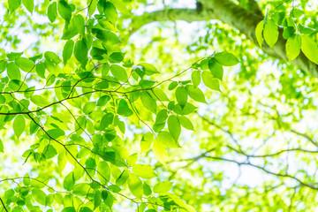 エコイメージ(Eco Image)