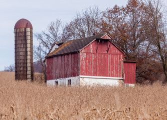 Old red barn surrounded by corn stalks