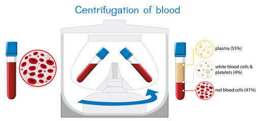 Centrifugation of blood diagram