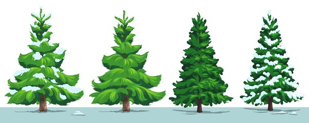 Christmas tree, green fir, pine, spruce with snow