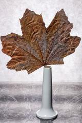 Autumn dried leaf of a plant