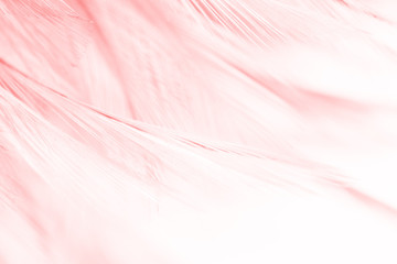 Coral Pink vintage color trends feather texture background