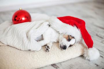 Sleeping dog in christmas hat
