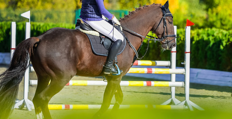 Beautiful girl on sorrel horse in jumping show, equestrian sports. Light-brown horse and girl in uniform going to jump. Hot, shiny day. Copy space for your text.
