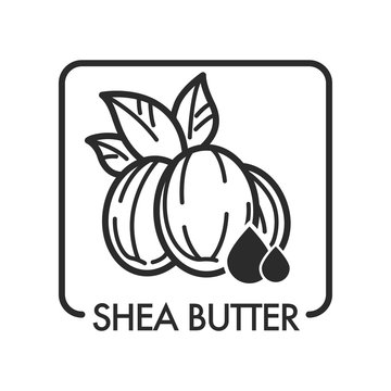 Shea butter organic product used in cosmetology for skin