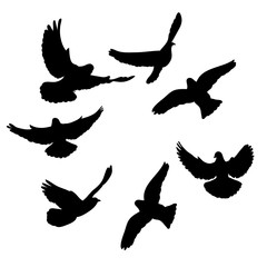 isolated, flock of birds flying, black silhouette
