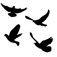 isolated, dove silhouette, flying flock of birds