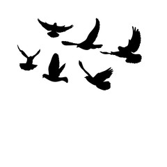flying flock of pigeons silhouette black