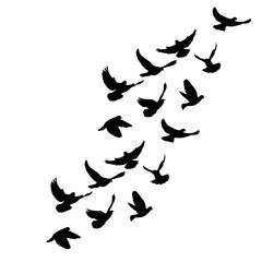 flying flock of doves silhouette