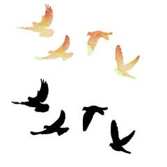 flying flock of pigeons