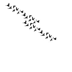 isolated black silhouette of pigeons flying on a white background