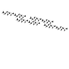 black silhouette of pigeons flying on a white background