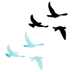 isolated, flock of flying birds, black silhouette of pigeons flying on a white background