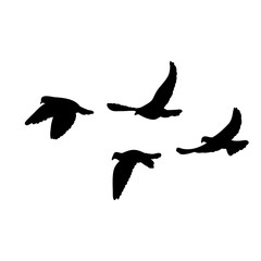 vector isolated, flock of flying birds, black silhouette of pigeons flying on a white background