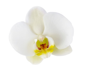 White orchid flower closeup isolated on white