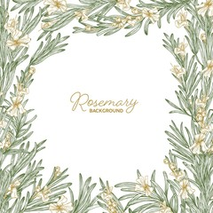 Frame made of rosemary drawn with contour lines on white background. Natural border consisted of beautiful aromatic wild blooming herb used as spice. Botanical realistic vector illustration.