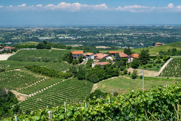 Vineyards of Langhe (Cuneo, Piedmont, Italy) at summer between Dogliani and Mondovì