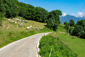 Road to Colle Fauniera, Piedmont