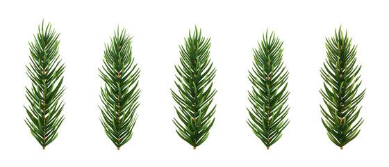Set of realistic spruce or pine branch leaf. Vector illustration.