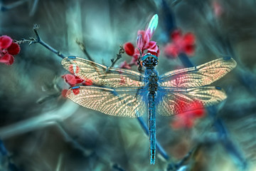 Printed roller blinds Butterfly Beautiful dragonfly sitting on flower in a summer garden