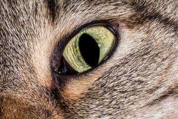 Closeup of Cat Eyes.