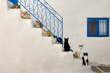Fotorolgordijn Kat Many cats lined up on a stairway in a Greek alleyway, Cyclades, Greece