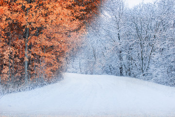 autumn winter forest orange leaves and bright white snow nature concept
