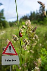 Safer Sex Ladybugs Marienkäfer