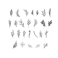 Hand drawn floral vector elements. Wild and free. Perfect for invitations, greeting cards, quotes, blogs, Wedding Frames, posters. Isolated