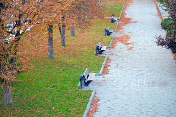 Four metal benches in the park in the autumn, a lot of benches in the park