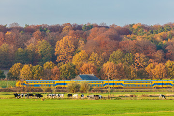 Autumn view of Dutch national park The Veluwezoom with a train passing by