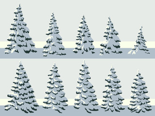 Simple illustration of snowy spruce trees (fir, fir-tree).