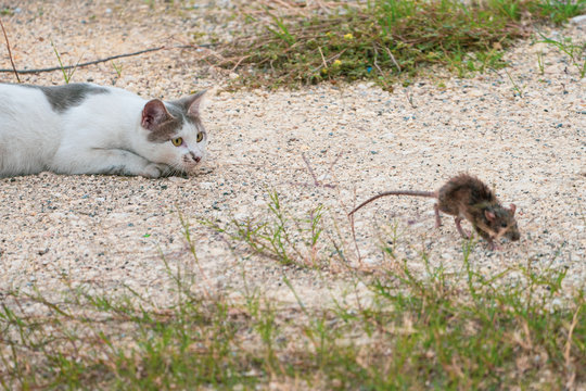 cat and mouse in nature