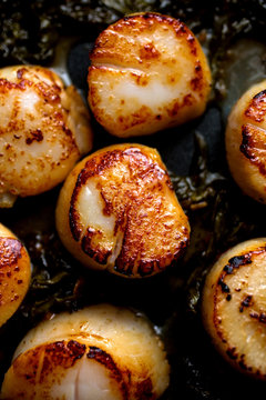 Close up of braised scallops with sorrel butter