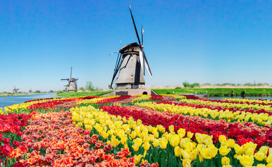 traditional dutch scenery with windmills over water and tulips in Kinderdijk at sunny summer day, Netherland Fototapete