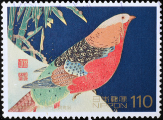 Painting of a Golden pheasant on japanese postage stamp