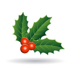 Holly Berries with Green Leaves Vector Illustration