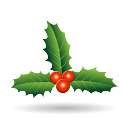 Holly Berries with Seperate Green Leaves Vector Illustration