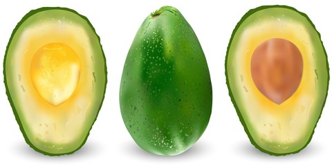Set of realistic green avocado. Vector illustration. Exotic evergreen fruit plants. Isolation on a white background