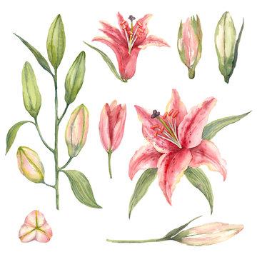 star lily sverige
