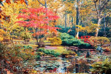 Obraz autumn in Japanese park - fototapety do salonu