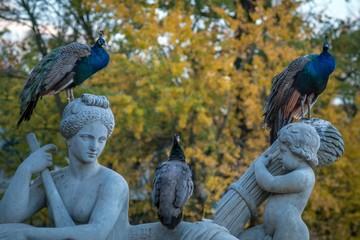 paw w parku z rzeźbami w zbliżeniu