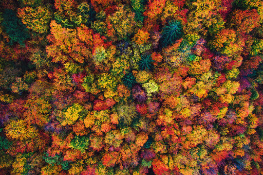 Aerial drone view over autumn forest. Colorful trees in the wood.