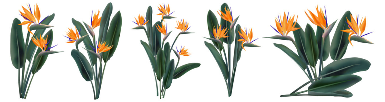Strelitzia Reginae tropical flower bouquets set
